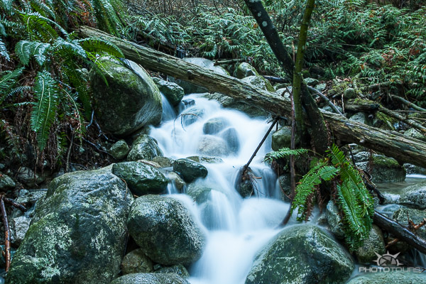 Photo Tours Vancouver North Shore mountains and rain forest by Aura McKay