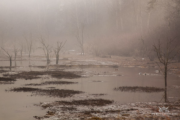 Photo Tours Vancouver landscape nature image in the fog from Elgin Heritage Park by Aura McKay