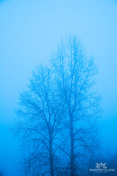 Photo Tours Vancouver tree in fog blue by Aura McKay