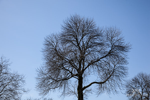 Photo Tours Vancouver trees against a blue sky at English Bay by Aura McKay