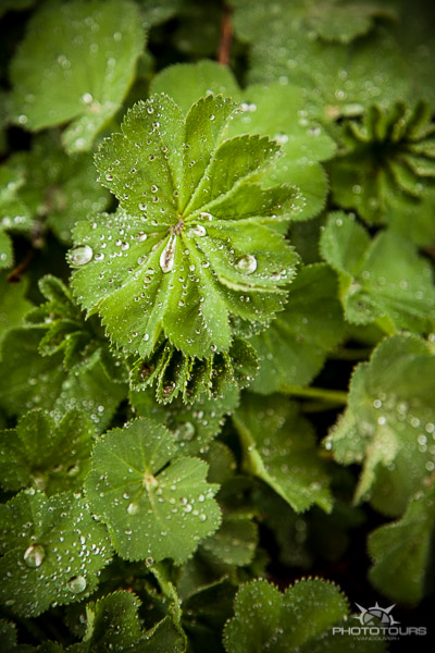 Photo Tours Vancouver nature and water droplets by Aura McKay