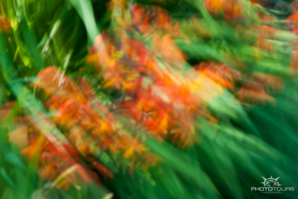 Photo Tours Vancouver intentional camera movement abstract flowers by Aura McKay
