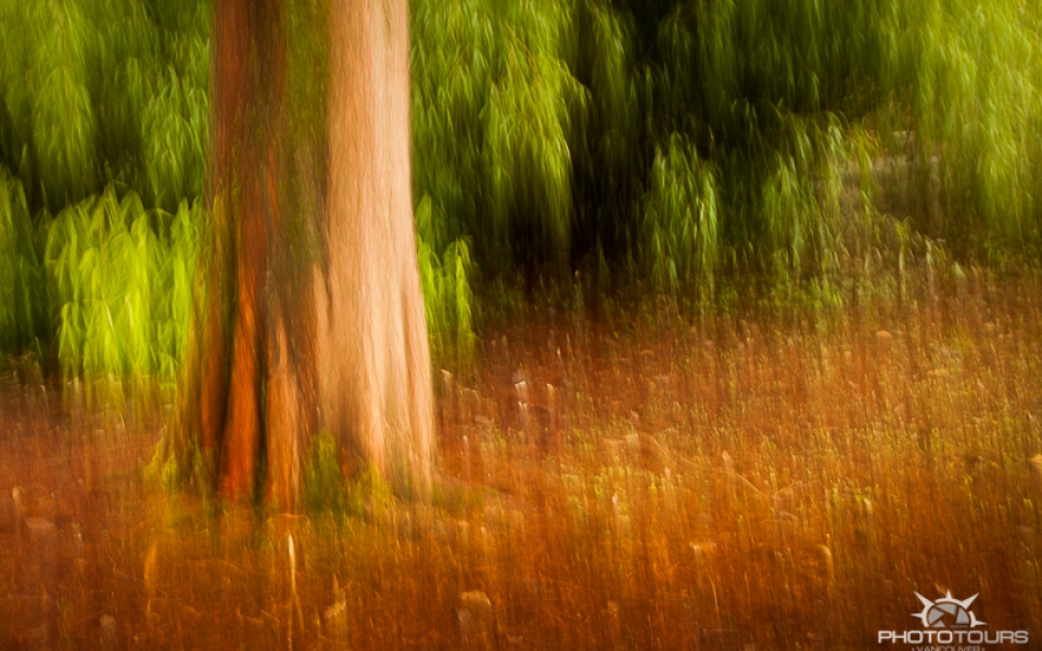 Photo Tours Vancouver Stanley Park by Aura McKay - intentional camera movement