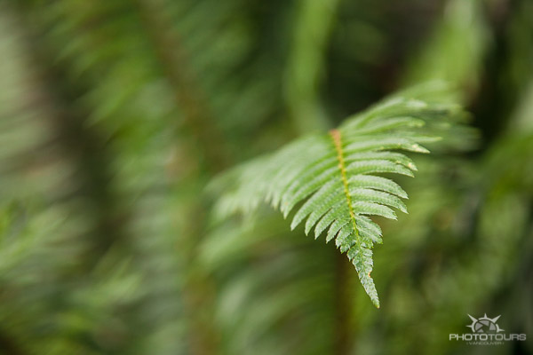 Photo Tours Vancouver spring time fern close up by Aura McKay